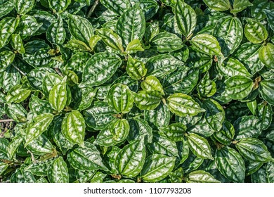 Exotic plants, green, patterned background