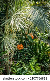 Exotic plants in the greenhouse, beautiful, tropical background