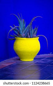 Exotic plants in yellow pots on the alleys in the botanical garden in the open air. Marrakech, Morocco, Africa