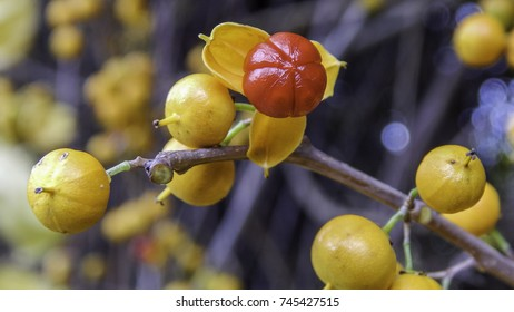 Exotic red berries in yellow cover, autumn fruits