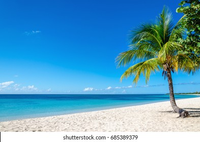 Exotic sandy beach with beautiful palm trees, Cuba, Caribbean Islands, Central America