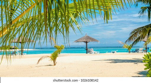 Exotic sandy beach with palm tree