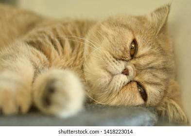Imágenes, fotos de stock y vectores sobre Cat Meme