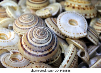 Exotic snail shells collection for sale in Rarotonga Cook Islands. Abstract backgrounds and texture.