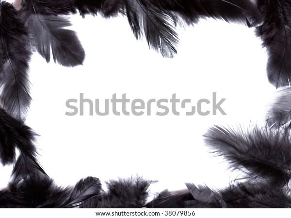 exotic soft beautiful black feather on white background
