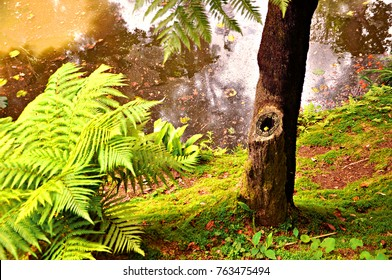Exotic species of fern in the untouched rain forest at Terra Nostra park in Furnas, Sao Miguel island, Azores, Portugal