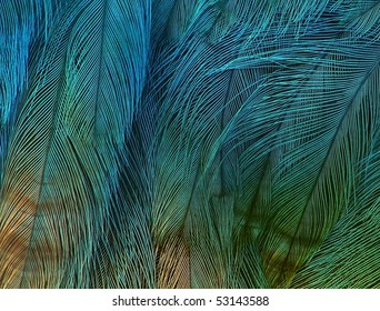 exotic texture feathers background, closeup bird wing