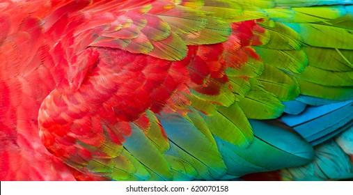 Imagenes Fotos De Stock Y Vectores Sobre Colored Wings
