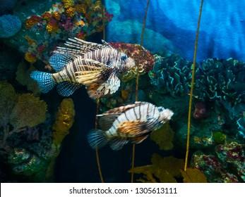 Exotic Tropical Fish in Aquarium