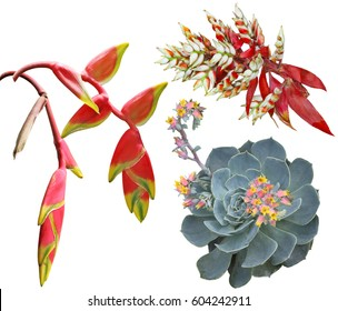 Exotic tropical flowers set isolated on white background