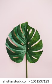 Exotic tropical Monstera palm leaf on pink background. Flat lay, top view minimal concept.