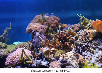 Exotic underwater coral colony.
