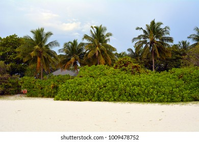 Exotic vegetation with palm trees in Maldives