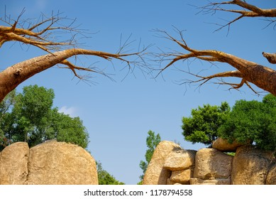 Exotic view with dry branches of baobabs above green trees and yellowish rocks.