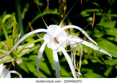 Exotic White Flower with Orange Pedicels