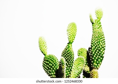 Expanding cactus ,succulent for collection and desk office with copy space for text