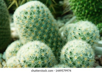 Expanding of cactus,succulent for collection,banner of green different shape cactus ,succulent with background blur