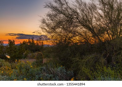 Expansive views of the Sonoran Desert in Arizona during spring time shows the many hues, the green foliage due to the large amount of rain during winter, the yellows, blues and oranges of the wild flo