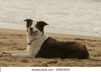 expectantly laying down dog