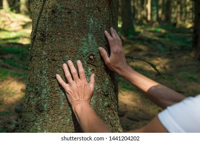 Experience the forest while bathing in the forest (Shinrin Yoku) with all her senses. A 50 year old blond woman feels the bark on the tree in the forest with both hands. The sun shines.
