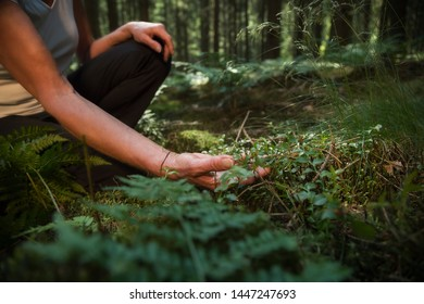 Experience the forest while bathing in the forest (Shinrin Yoku) with all her senses. A 50 year old woman is tasting wild herbs in the forest. The sun shines through the leaves. Atmospheric.