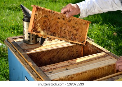 Experienced senior beekeeper working in his apiary in the springtime