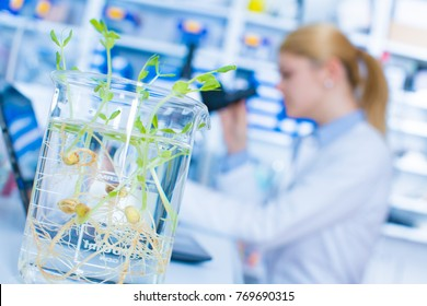 Experiment with genetically modified plants. Young woman laboratory assistant at the Laboratory of Plant Genetics GMO