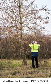 Expert during the examination of trees for a possible pest infestation by the Asian longhorned beetle in Magdeburg. The beetle from Asia was first registered in Europe in 2001.