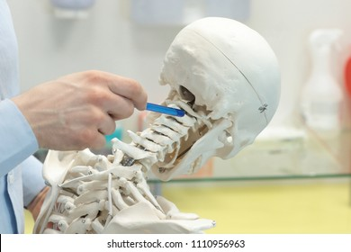 expert pointing at cervical spine section human skeleton model as a dentist at work - occupational disease