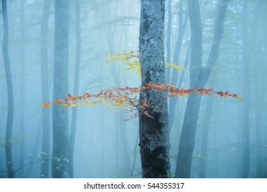 Expiring autumn