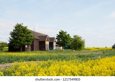 A exploded view of vivid yellow colza field and typical English barn in rural countryside Essex, UK