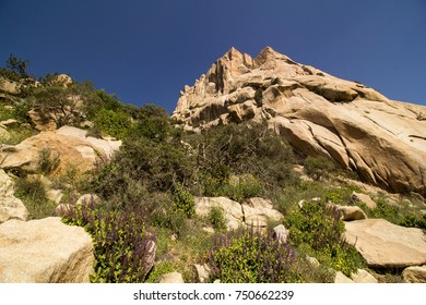 exploring beautiful mountain with plants abha saudi arabia jabal ibrahim