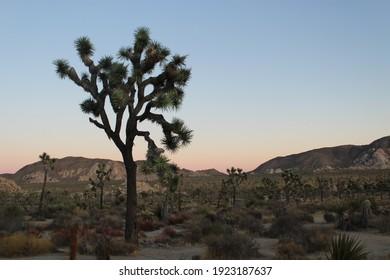 Exploring the beauty of Joshua Tree