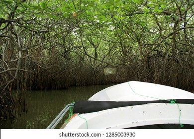 Exploring a cave-like opening in the dense mangrove woods near Bentota, Sri Lanka, with a small boat