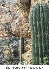 Exploring in the mountains of Tucson, Arizona!
