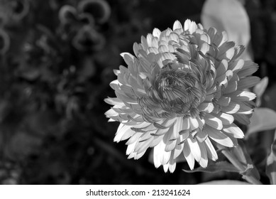 An Explosion (Flower) Against a Blurry Background (Black and White)