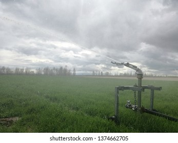 Explosion of a multitude of drops of water under pressure. Irrigation cannon, equipment and agricultural machinery of the center of Spain. Watering the cereal. Grain plantation. Sprinkler system.