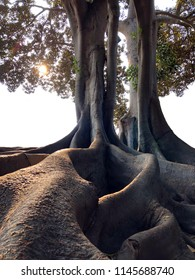 Exposed tree roots