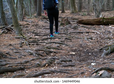 Exposed tree roots are caused by a lack of topsoil. Runners and hikers alike need to be careful while on the trail.