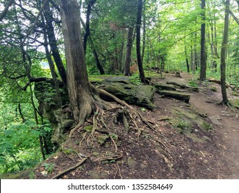 Exposed tree roots clinging to the edge of the niagara escarpment, along hiking trail in Beamer Memorial Conservation Area in Grimsby, Ontario, Canada. A designated UNESCO World Biosphere Reserve.