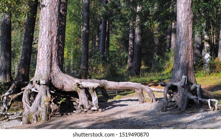 Exposed tree roots due to erosion