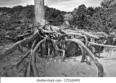 Exposed tree roots form a very organic composition that draws the eye strongly to the center.