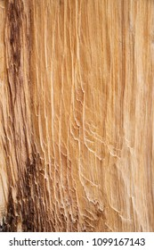 exposed and worn bristlecone pine wood background texture