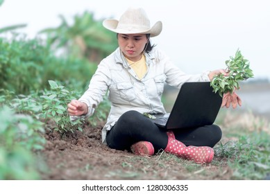 Expression of plant research by scientist for outfield laboratory, Asian woman gardener be used a laptop to searching data for plants disease, Emotion of happiness modern agriculture with Technology.