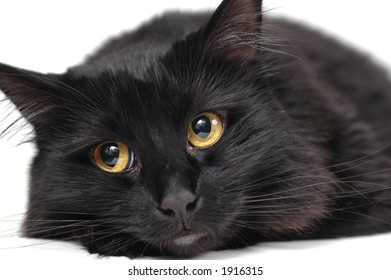 Expressive black cat isolated on white