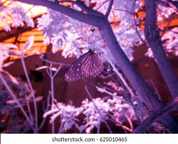 Extended infrared shot of butterflies, Tokyo, Japan. Taken with a specially modified camera. All light recorded is invisible to the naked eye.