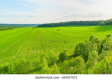 Extended sunny green field under crop with sower tracks against forest background in backlit