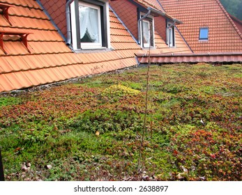 extensive green roof  on an environmental friendly house
