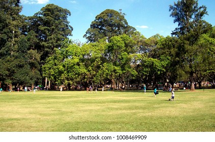 extensive lawn and in the background large trees and a clear blue sky, park Ibirapuera, sp, brazil