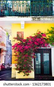 Exterior door covered in flowering vines on yellow building, Old San Juan Puerto Rico